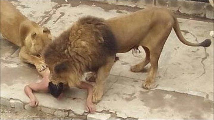 شديد الاتقاد و الحماسة جلسة جين اوستين فيديو حيوانات مفترسة Sjvbca Org