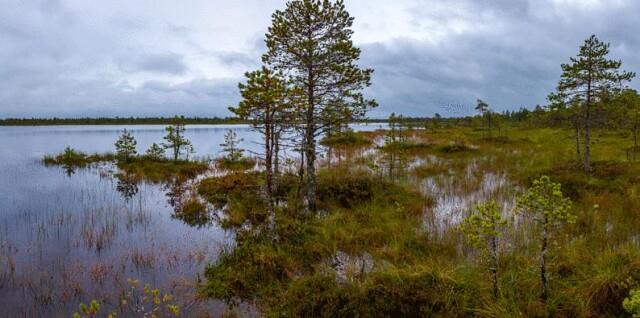 Заказник Глебовское болото, Россия