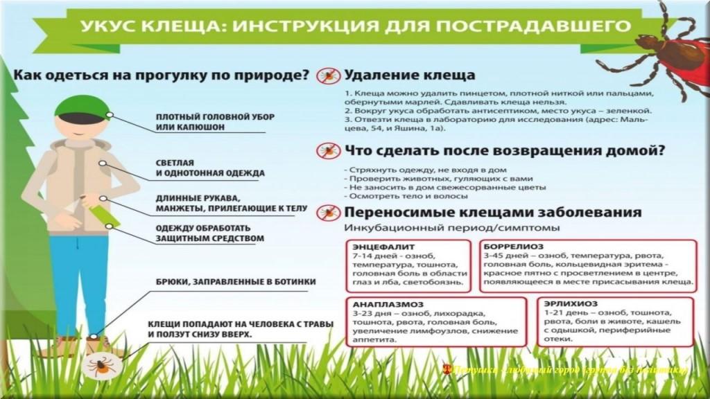 В Саратовской области активизировались клещи