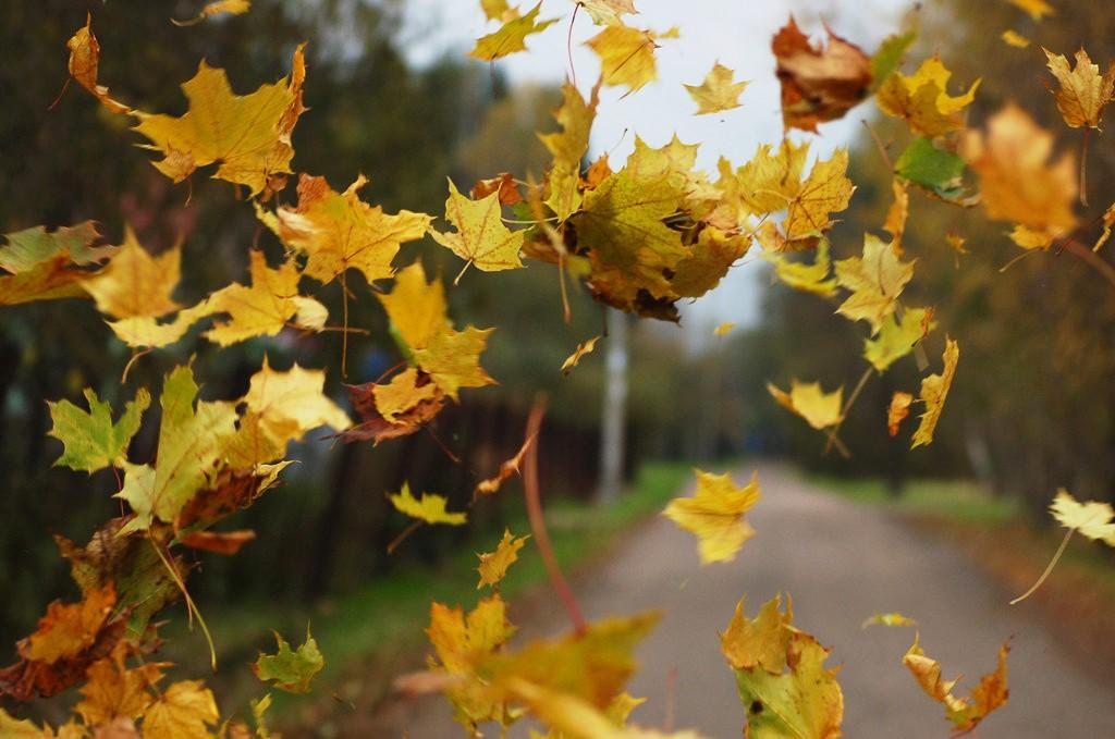 Конец сентября в Курской области будет без дождей, но с сильным ветром