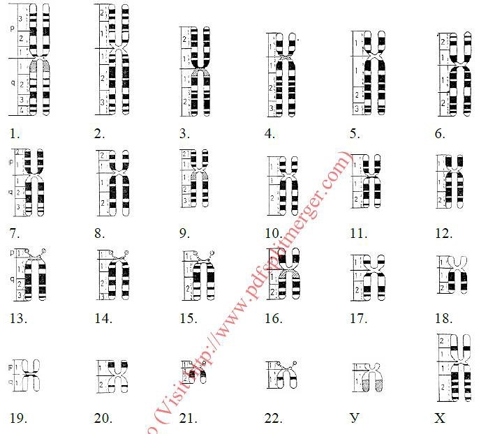 Формула кариотипа соматических клеток женщины. Понятие о кариотипе ...   622x709