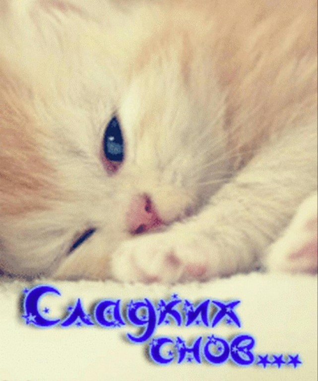 Картинка сладких снов котенок