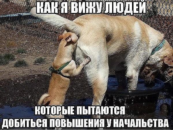 Шлюха Лижет Жопу