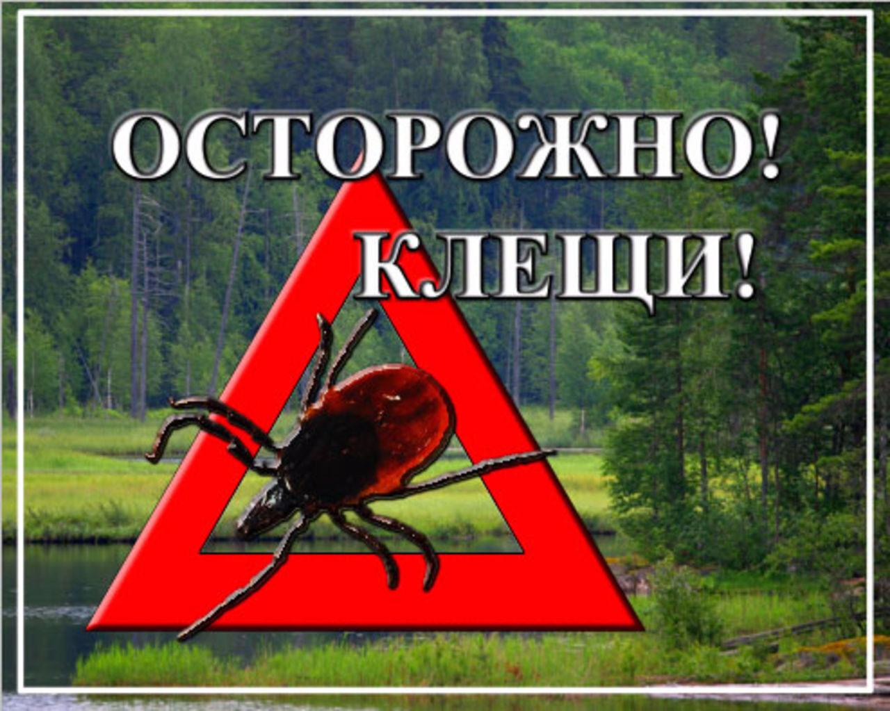 Осторожно! В Асбесте проснулись энцефалитные клещи.