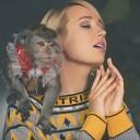 Клава Кока - Dance Monkey Tones and I yaroo5 Cover