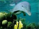Песни старых дворов - Дельфиненок