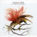 Andrew Bird - Sectionate City