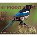 Detroit Soul Sensation - Superstition