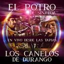 Los Canelos De Durango El Potro de Sinaloa - El Picho En Vivo