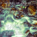 Voices of Nature - Thunder over a Rainforest Stream