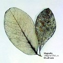 It s All Vain Dogzilla s Atomic Acid Remix - Magnolia