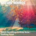 Природа - Звуки леса после дождя