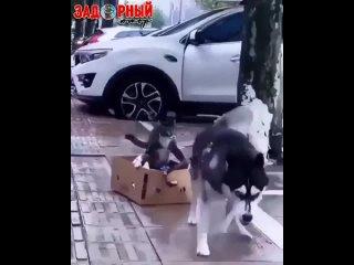 Поймал такси