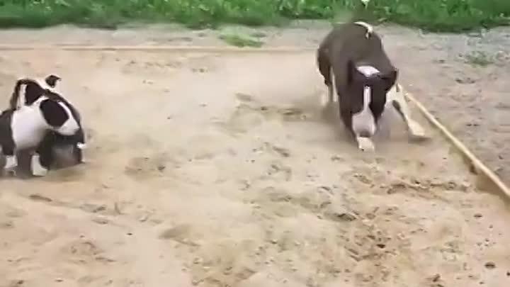 Глисты у собакена что ли