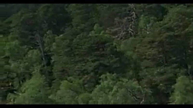 Псы воины 2002 Боевик