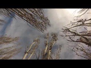 [TimToker] Как спилить дерево на кладбище без автовышки? Это задача для профессиональных арбористов.