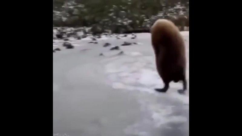 пингвин нытик