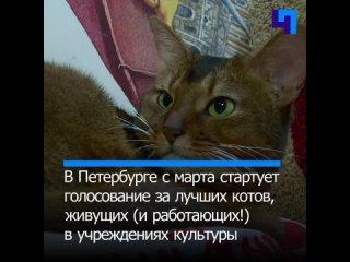 В России стартует перепись музейных котов. Кто лучший мяучный сотрудник?