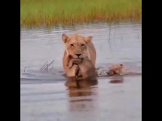 Сынок, ты мужчина! Плыви сам!!!