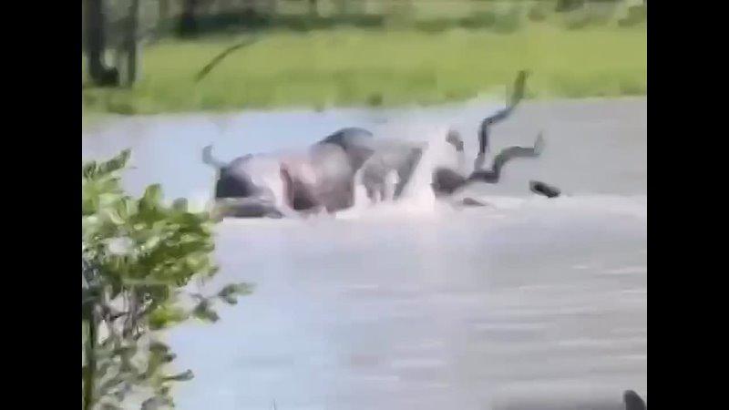 Видео от ОПАСНЫЙ МИР