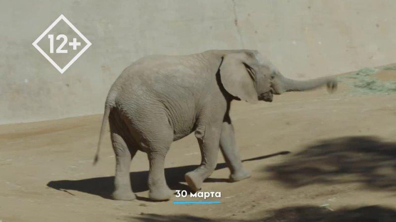 Зоопарк Сан Диего Animal Planet