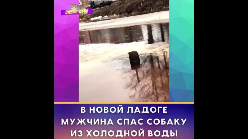 В Новой Ладоге мужчина спас собаку из холодной воды