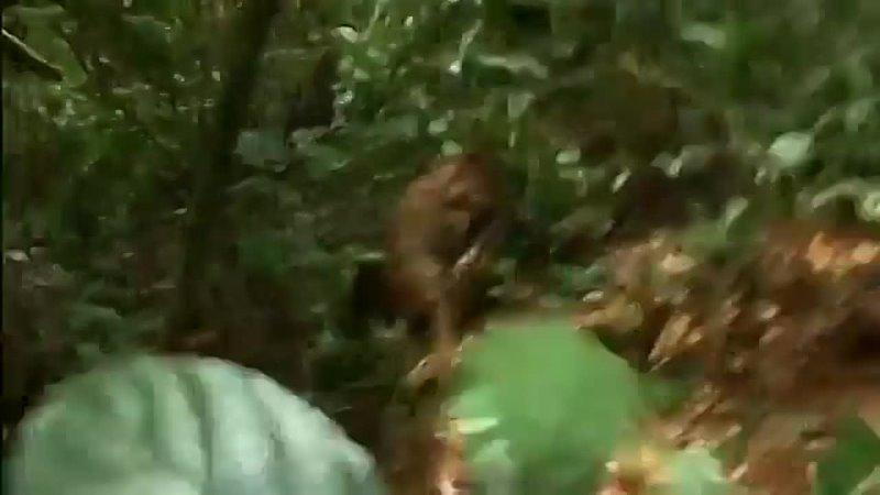 Дикий мир животных Природа Африки BBC Документальный фильм