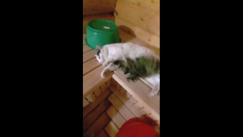 Челябинский кот Мурзик обожает париться в бане