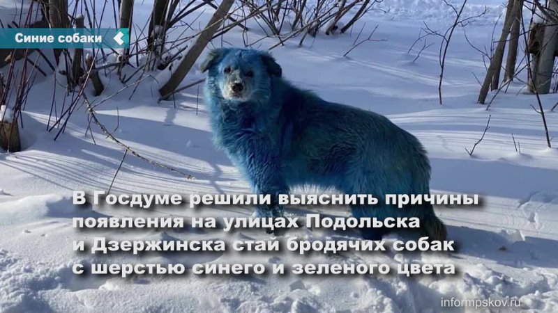 Госдума выяснит причины появления стай синих собак в российских городах