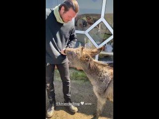Кыванч и Башак в Организации по спасению животных |