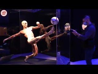 Выставка из тел людей