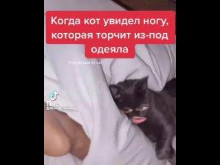 Когда кот увидел ногу, торчащую из-под одеяла