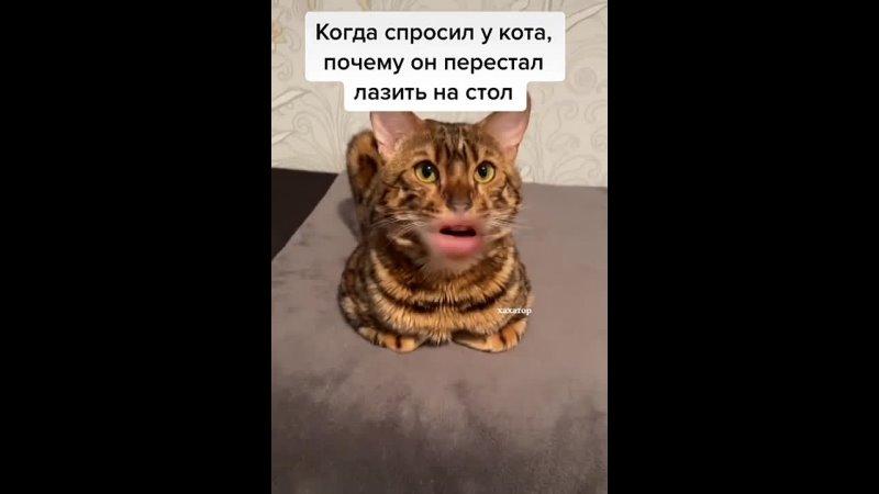 умный кот попался