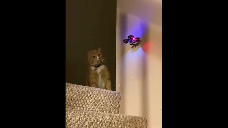 Кот лучшее оружие против дронов