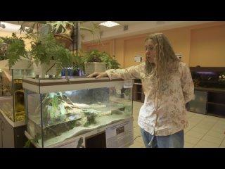 Видео экскурсия по выставке реликтов