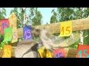 Детский проект С Днём Рождения ! Маша и медведь