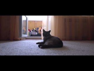 Кот, который смог