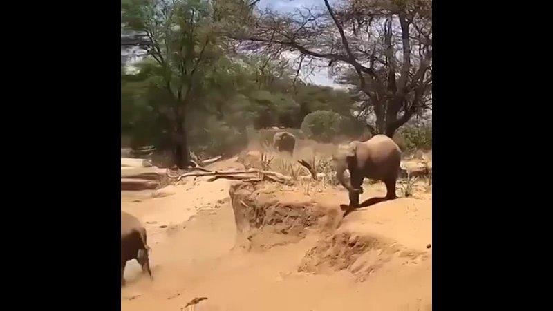Слонёнок показывает как надо спускаться