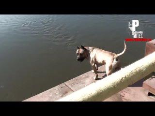 Самая умная собака в Мире! Нереальный трюк!)) [Рыбачёв и Пёс]
