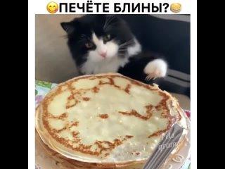 Приятного аппетита) как раз лапки после лотка ещё ароматнее)