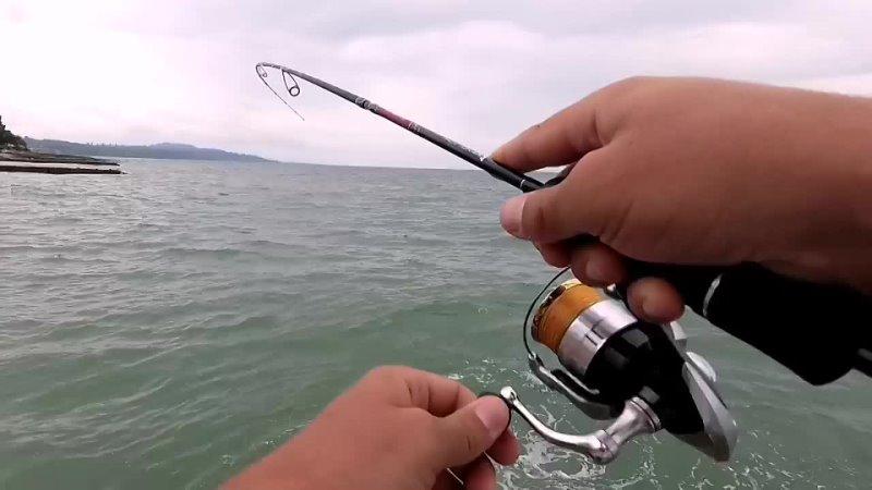 Горбыль - рыба, которая способна дать отличнейший бой и здорово потрепать нервы!