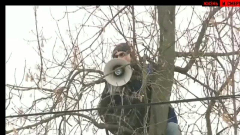 Чувак с мегафоном устроил мощный перформанс на дереве у Бабушкинского суда.