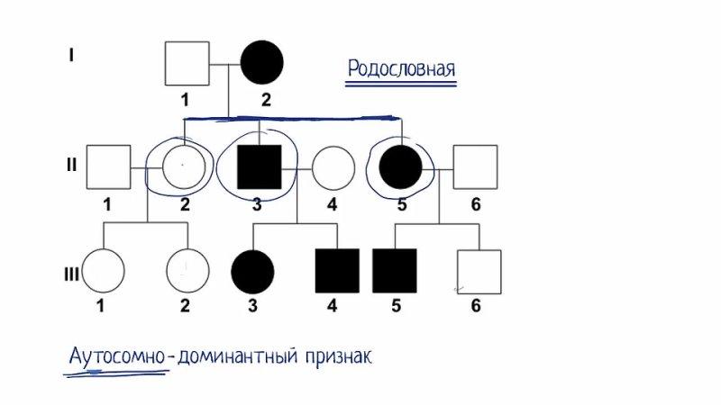 Родословная видео 9 Классическая генетика