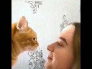 Существует два типа котов.mp4