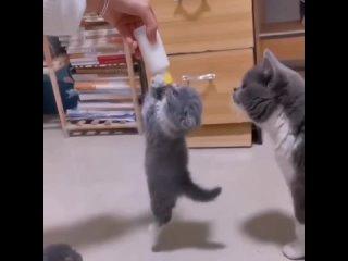 А ну отцепляйся! Мы тоже хотим молочка! 😼🐾