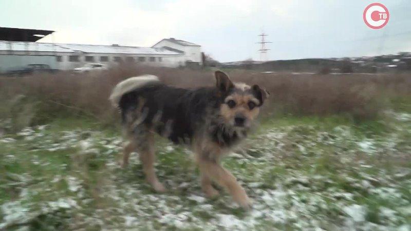 Севастопольский пес Луи из приюта ищет дом
