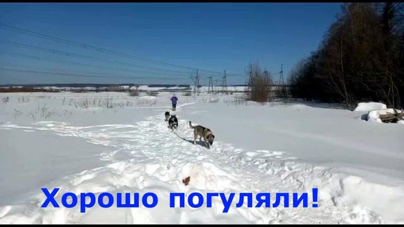 Большая прогулка