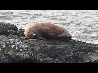 Video by Независимый Калейдоскоп