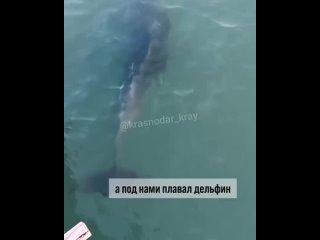 В Анапе можно гуляя по пирсу, пить кофе, а в это время под вами будет проплывать дельфин