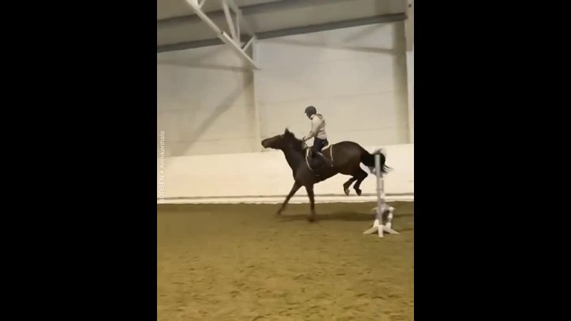 Horsen InstaUtility 00 CLob4s4nPjz 11